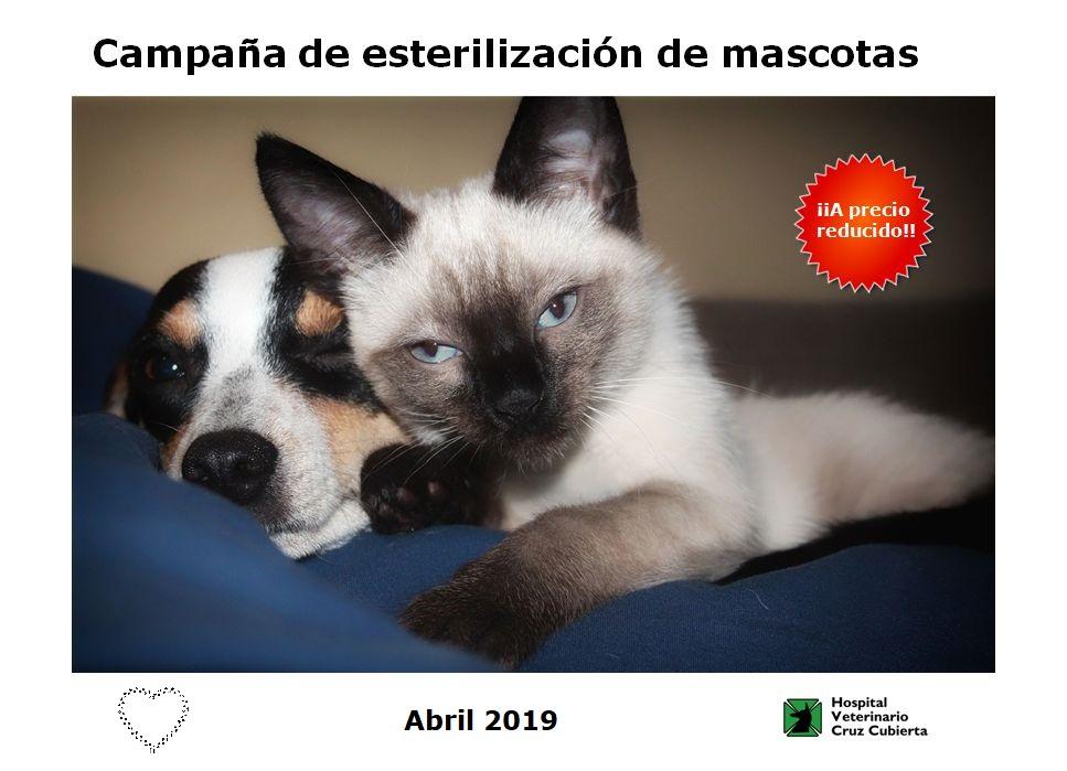 campaña de esterilizacion 2019