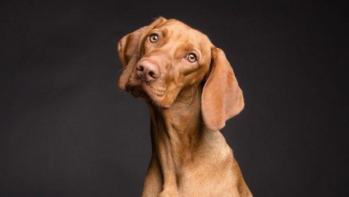 cinco sentidos en los perros