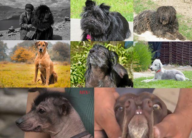 razas de perros mas peculiares destacado 1