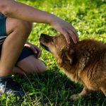 perros contra el acoso escolar