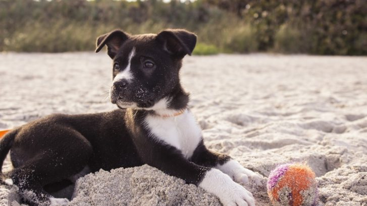 playas para perros en España