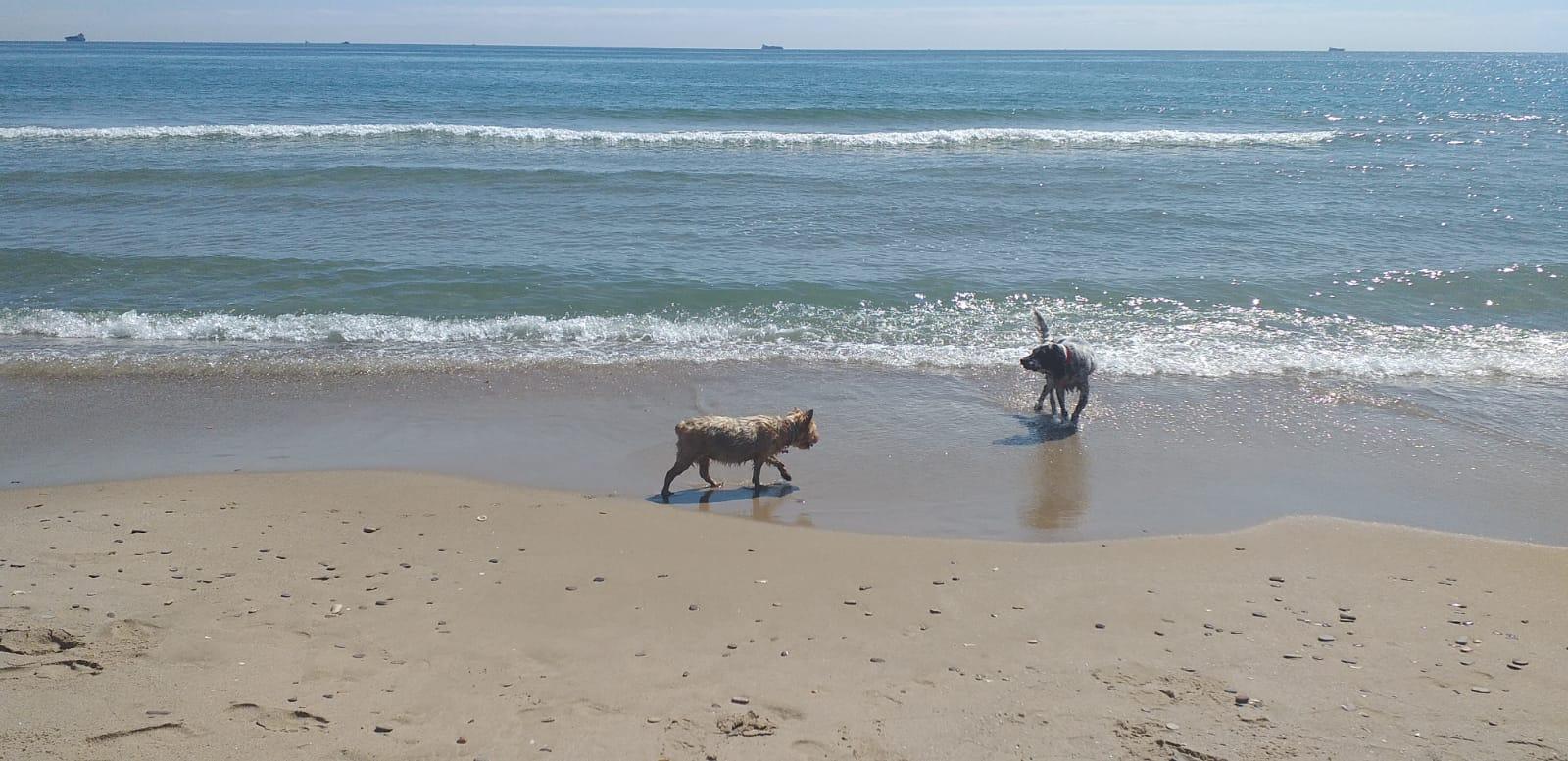 razas de perros nadadoras