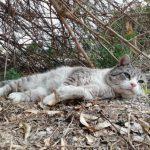 enfermedades exterior gatos