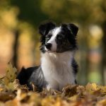 mascotas en otoño