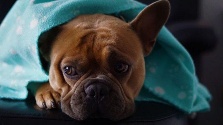 la tos en los perros