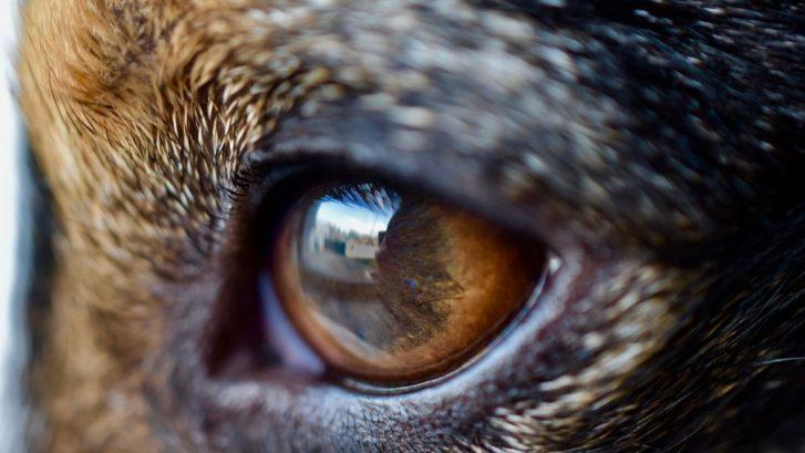 exploracion oftalmologica destacada