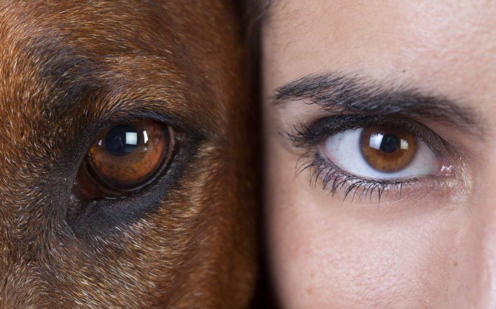 ojos perros y humanos