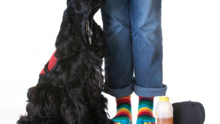 perros de alerta médica