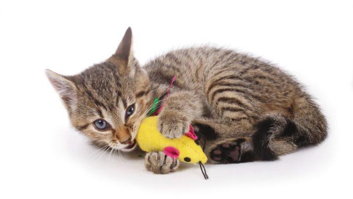 el juego en perros y gatos