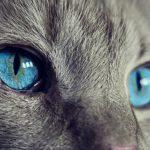 colores del iris en nuestras mascotas