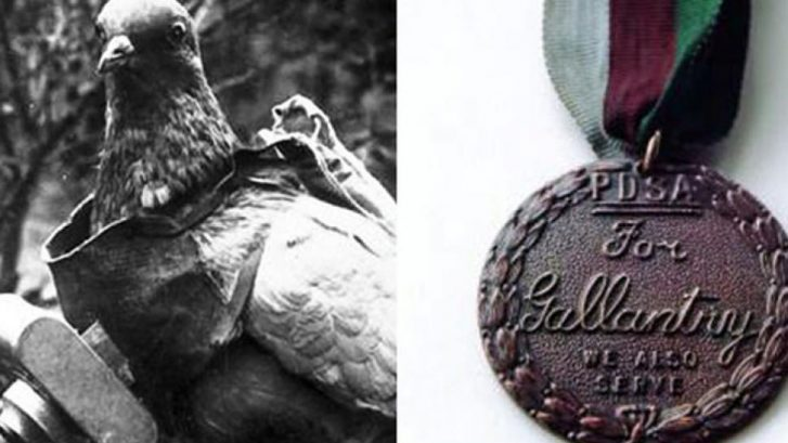 medalla Dickin