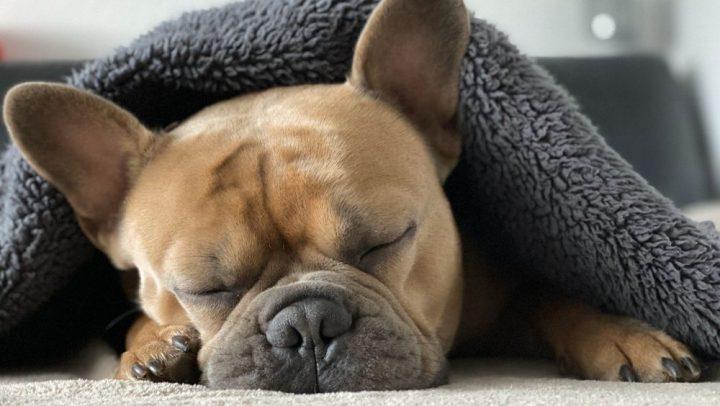 los perros y el sueño
