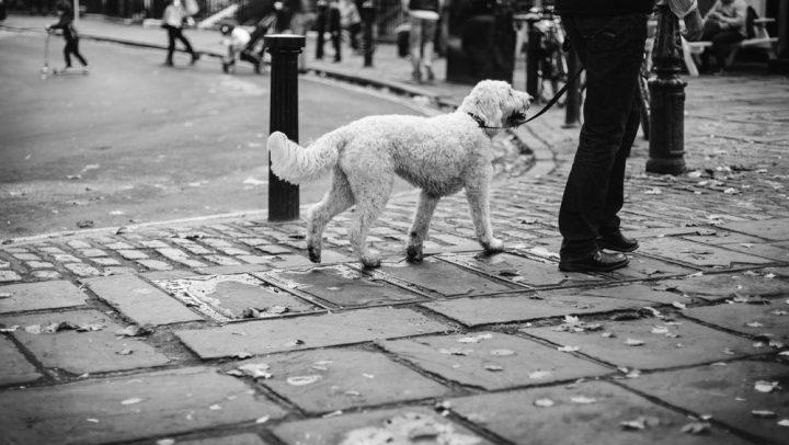 orina de tu perro