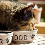 alimentacion perros y gatos esterilizados