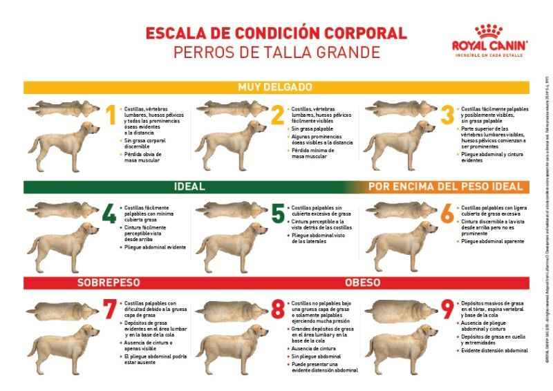 escala_de_condicion_corporal_perro_grande_royal_canin