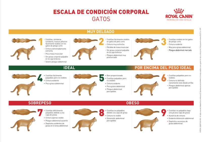 tabla_condicion_corporal_gato