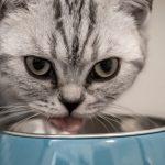 alimentación para un gato sénior