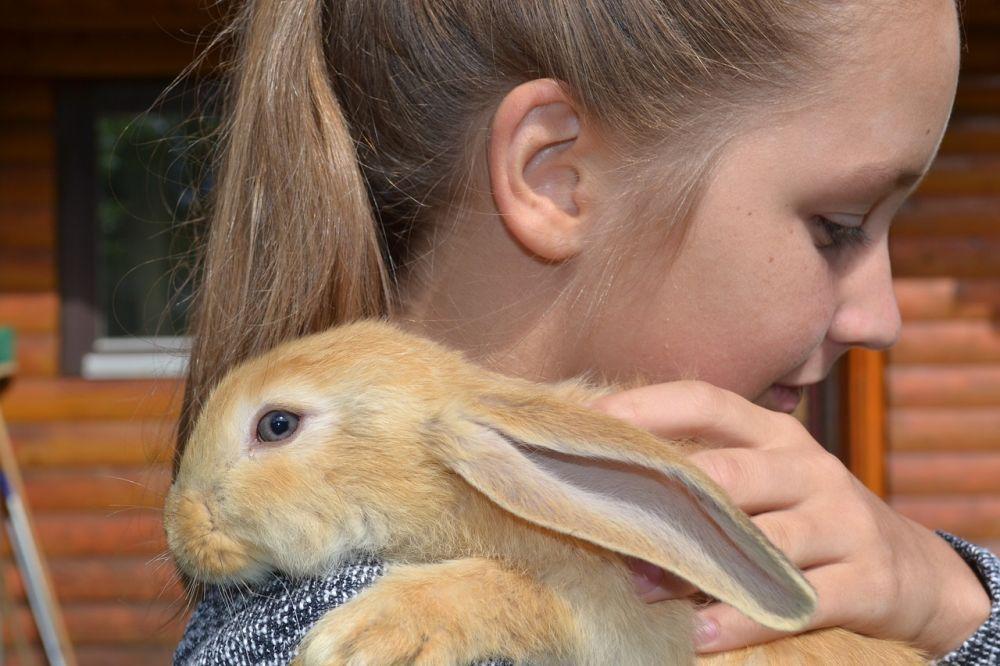 cómo se comunican los conejos con las personas