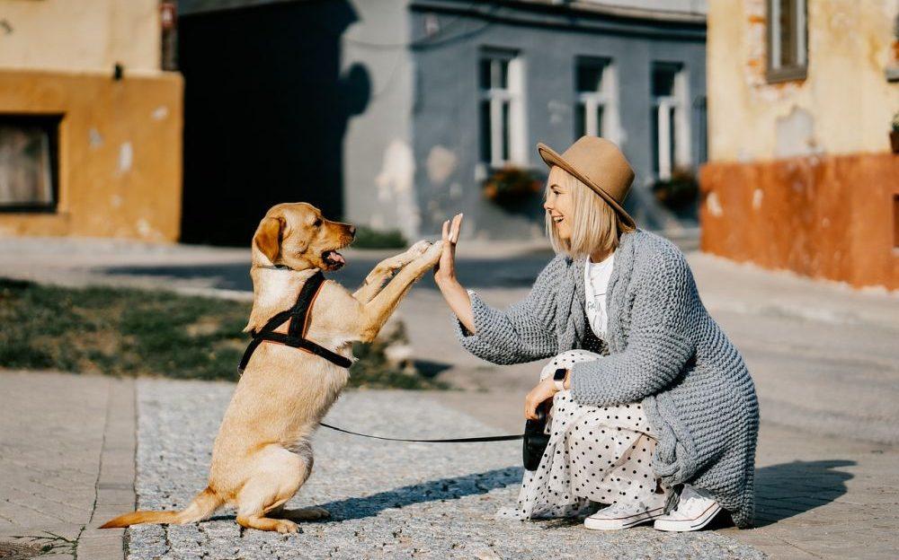 mascotas_sereshumanos
