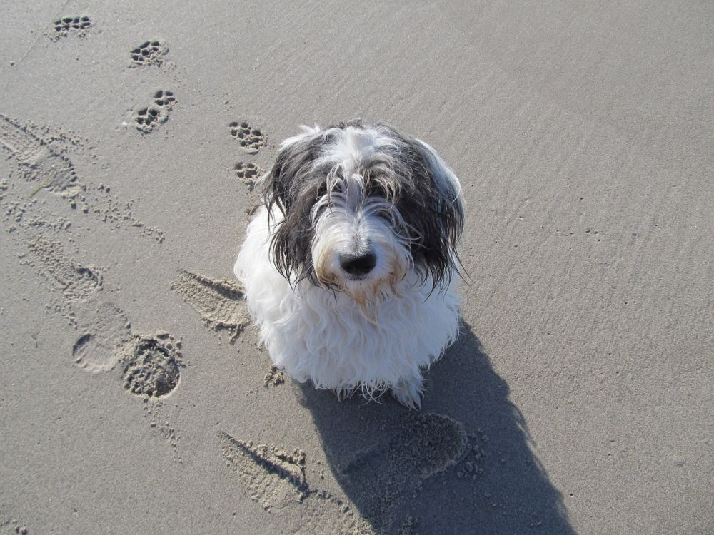 proteger a tu mascota antes de ir a la playa