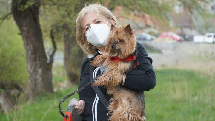 mascotas fatiga pandemica