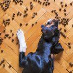 perro come muy deprisa