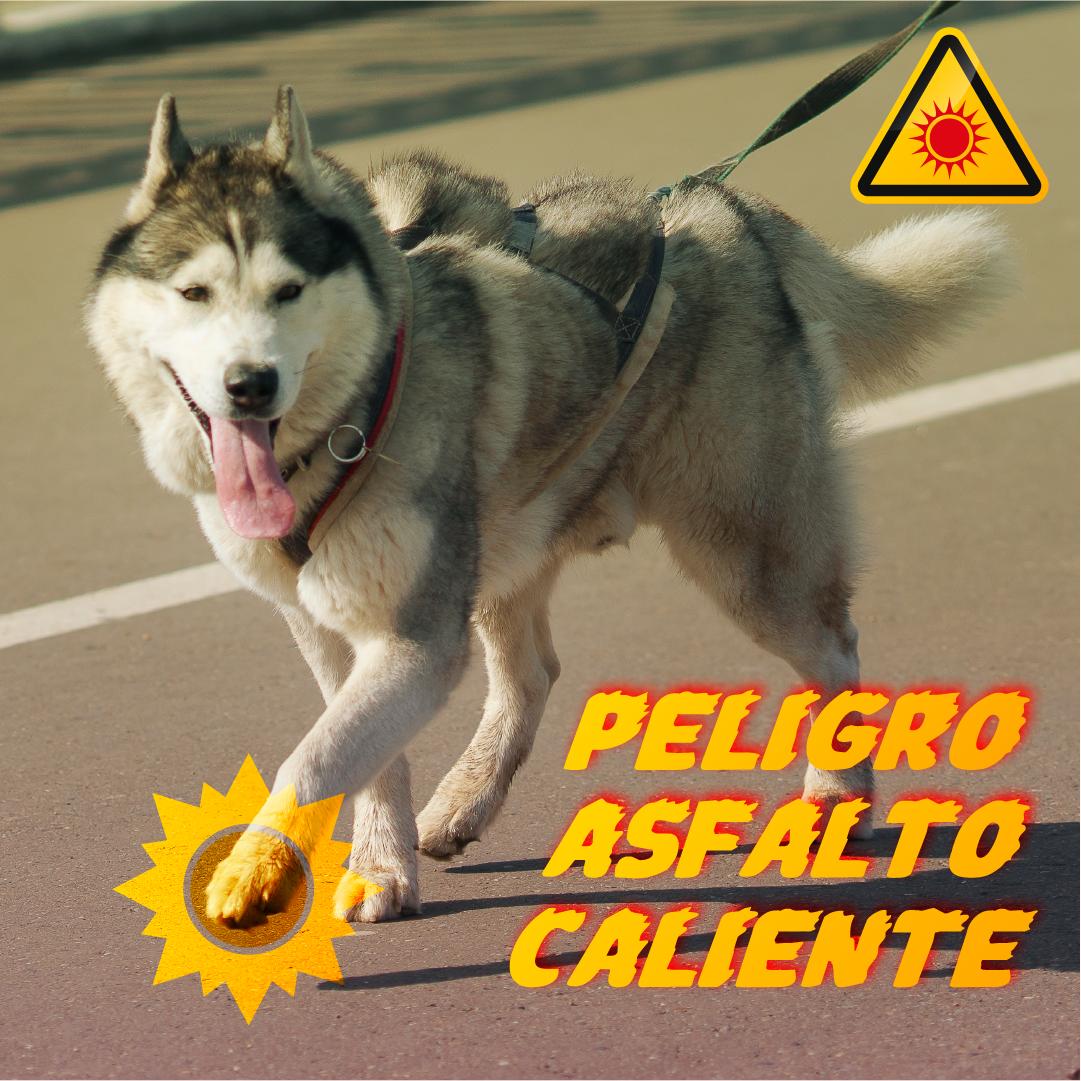 PostCalor_Asfalto