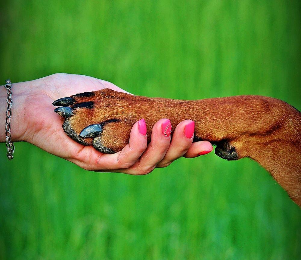 almohadillas_perros